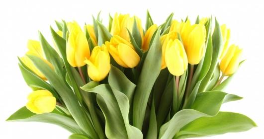 Поздравляем с женским весенним праздником! С 8 марта!